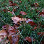 Herbstlaub im Gras